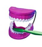 Jeu éducatif kit mâchoire et brosse à dents dès 6 ans